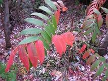 De herfstverlof, Herfst, Backgraund, Kleurrijke Octeber, Groen, Rood, stock afbeeldingen