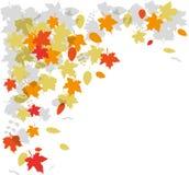 De herfstverlof het vallen Stock Foto
