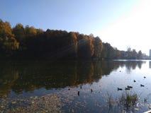 De herfstvijver De bezinning in het water stock foto