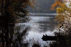 De herfstvijver wildlife royalty-vrije stock foto's