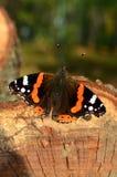 De herfstvlinder Royalty-vrije Stock Fotografie