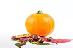 De herfstvruchten als symbool van Halloween stock illustratie