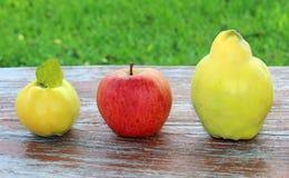 De herfstvruchten, appel en kweeperen Stock Fotografie