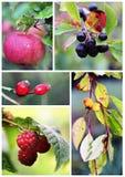 De herfstvruchten en bessen Stock Foto
