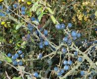 De herfstvruchten, zuidelijke Bohemen Stock Foto's