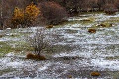 De herfstwaterval op een berghelling in het bos stock fotografie