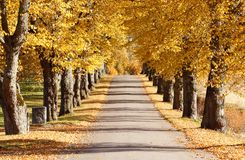 De herfstweg Stock Afbeelding