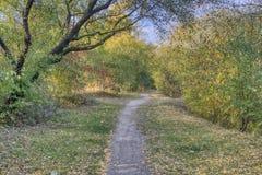 De herfstweg, bomen en struiken stock afbeelding