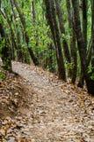 De herfstweg door bomen in bos Royalty-vrije Stock Afbeeldingen