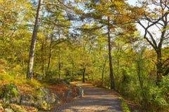 De herfstweg door het hout stock fotografie
