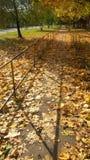 De herfstweg in gouden bladeren stock foto