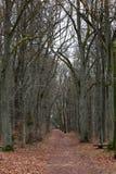 De herfstweg in het bos Stock Afbeelding