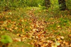 De herfstweg in het bos gekleed in gele bladeren Royalty-vrije Stock Afbeelding