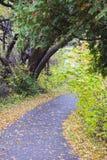 De herfstweg in het hout royalty-vrije stock foto