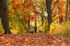 De herfstweg met gekleurde bladeren stock fotografie