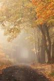 De herfstweg onder bomen Royalty-vrije Stock Foto's
