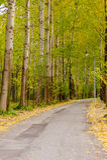 De herfstweg in park Stock Fotografie