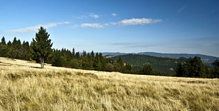 De herfstweide met geïsoleerde boom en panorama van bergketens in Javorniky-bergen Royalty-vrije Stock Foto