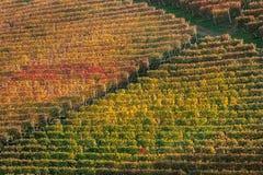 De herfstwijngaarden in Italië Royalty-vrije Stock Fotografie