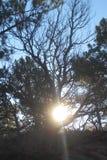 De herfstzon door de boom Stock Afbeelding