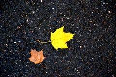 De herfstzon, heldere esdoornbladeren Royalty-vrije Stock Afbeelding