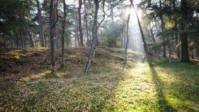 De herfstzonsondergang in Misty Forest royalty-vrije stock fotografie