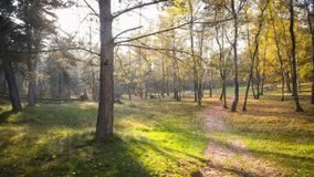 De herfstzonsondergang in Misty Forest stock foto