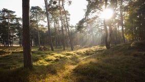 De herfstzonsondergang in Misty Forest stock afbeelding
