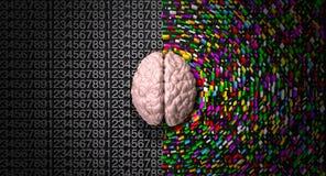 De Hersenen van de Rechterkant van de linkerkant royalty-vrije stock afbeelding