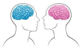 De hersenen van het geslacht Stock Afbeelding
