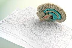De hersenen van het model op diagramachtergrond Royalty-vrije Stock Foto's
