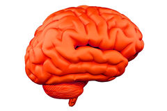 De hersenen van Humain Royalty-vrije Stock Foto