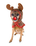De herten van de hond Royalty-vrije Stock Fotografie