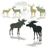 De herten van elanden en fawn Royalty-vrije Stock Afbeeldingen
