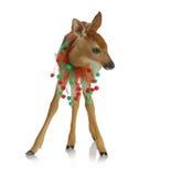 De herten van Kerstmis Stock Fotografie