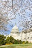De het Capitoolbouw van de V.S. in de lente, Washington DC, de V.S. Royalty-vrije Stock Fotografie