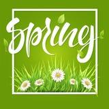 De het groene gras en madeliefjes van het de lentekader vector illustratie