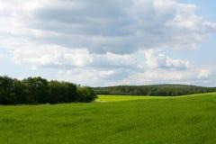 De het groene kruid en hemel van het behang stock afbeeldingen