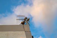 De het lachen duifplaatsing op de TV-antenne - Beeld royalty-vrije stock foto