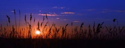 De het plaatsen zon en het gras Stock Fotografie