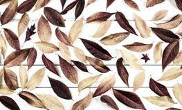 De het Stillevenvertoning van dalingsbladeren met natuurlijke warme monochromatische bruine tonen en behandelt de houten de Raads stock foto