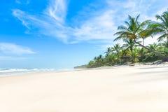 De het strandpalmen van het paradijs witte zand stock afbeelding