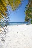 De het tropische Strand en Palmen van het Zand Royalty-vrije Stock Afbeeldingen