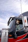 De het vechten hond gluurt uit het semi vrachtwagenvenster die I beschermen royalty-vrije stock foto's