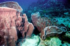 De het verrassen wereld van koralen van Andaman overzees 39 royalty-vrije stock foto