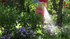 De hete vrouw van de tuinarbeider in borrels en bustehouder het water geven bloeit in de tuin van de de zomertijd 4K stock video