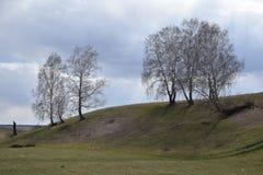 De heuvel met berken royalty-vrije stock foto