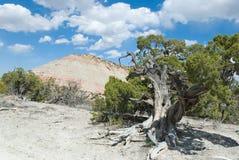 De heuvel van de jeneverbes en van de woestijn royalty-vrije stock foto's