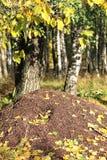 De heuvel van de mier. Stock Afbeeldingen