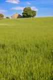 De heuvel van het gras Stock Afbeelding